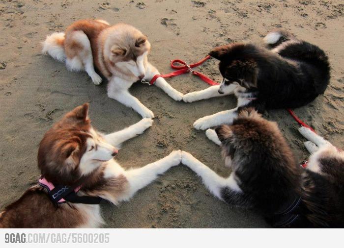 Blameless Huddle Dog