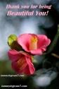 Blameless Flower 3.3