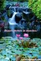 Blameless Flower 8.8