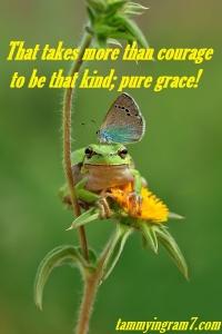 Blameless Courage Kind Frog 7