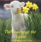Blameless Lamb 7