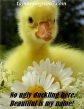 Blameless No Ugly Duckling 1