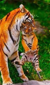 blameless-mamas-love
