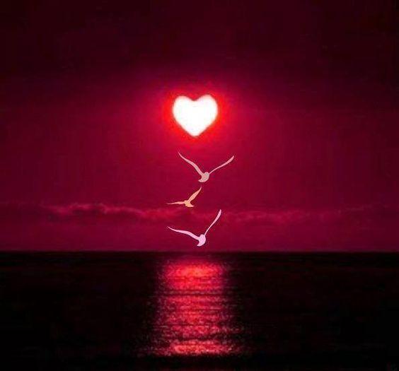 Blameless Heart Love 3